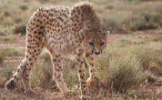 اصلاح مرز پناهگاه حیات وحش دربند راور در دستور کار محیط زیست کشور قرار گرفت