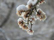 ادامه بارش های پراکنده باران و برف در استان کرمان