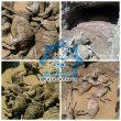 تلف شدن ٢۵۰ راس گوسفند بر اثر سیلاب در روستای گوهجر راور+تصاویر