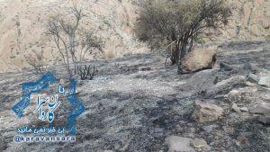 """خاکستر شدن ۱۰ هزار مترمربع از پوشش گیاهی ارتفاعات """"کوه گاو"""" بر اثر آتش سوزی عمدی+تصاویر"""