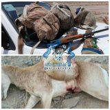 کشف و ضبط لاشه یک راس بز وحشی از شکارچیان متخلف در پناهگاه حیات وحش دربند راور
