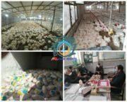 ورود مدعی العموم به کمبود مرغ گرم در بازار شهرستان راور