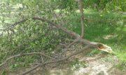 خسارت طوفان به باغ های کشاورزی شهرستان راور +جزئیات